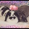 Rose12622's avatar