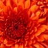 rose64bud's avatar