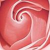 Roseaic's avatar