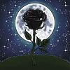 RoseOfTheNight4444's avatar
