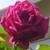 RosesEtFleurs's avatar
