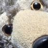 rosettathewolfy's avatar