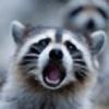 RostaNorsk's avatar
