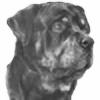 RottweilerRage's avatar