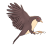 RRelf's avatar