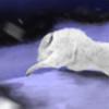 rrogers8's avatar
