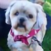 rubydog93's avatar