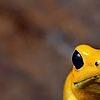 Runezstylez's avatar