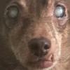 runtev's avatar