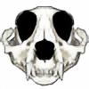 Rusakkoko's avatar