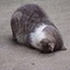 Rusland886's avatar