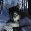 RussellTuller's avatar