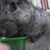 Ryan-Zen's avatar