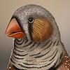 Sabinzie's avatar