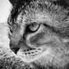 sableantlers's avatar