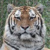 Sabreleopard's avatar
