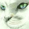 safija36's avatar