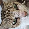 SallyPhanDu's avatar