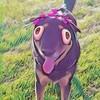 SaltieOGArts's avatar