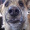 saltydogsrfr's avatar