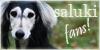 Saluki-Fans