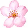 SamaChama's avatar