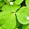 samaraangel's avatar