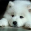 SamaraWoof's avatar