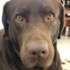 samfrid's avatar