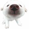 samiximas22's avatar
