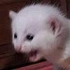 SammyChanArts's avatar