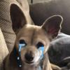 SammyIsNotANerderer's avatar