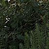 samstrack's avatar