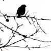 sannwald's avatar