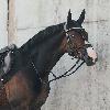 Saphira004's avatar