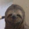 sapoltop's avatar