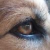 Sassykatt1's avatar