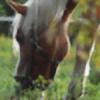 savannaslew's avatar