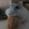 Schaf09's avatar
