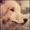 Schattey's avatar