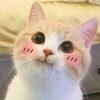 schizophreniccats's avatar