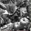 scopolamin's avatar