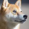 scorp200's avatar
