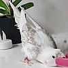 SCPDea's avatar