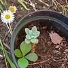 Scrubs3's avatar