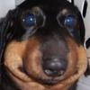 seadoggos's avatar
