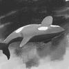 seafreshorca's avatar