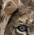 seastarclothing's avatar