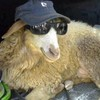 Sejant-Lamb's avatar