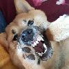 seles66's avatar